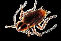 Roach-IA.png