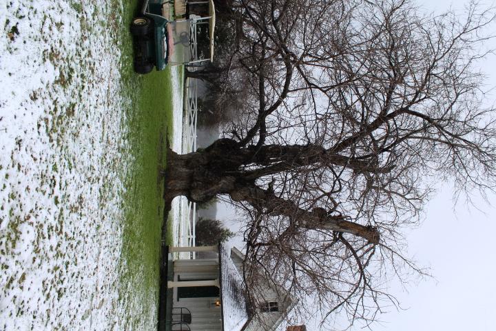 Living Quarters 2 & Mulberry Trees