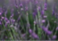 1-1_edited_edited.jpg