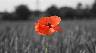 Lee Rangers YFC remembers