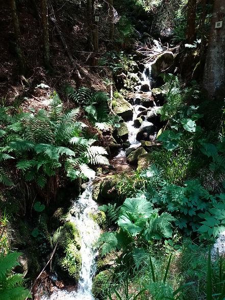 Ruisseau le Rudlin
