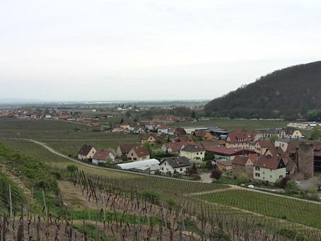 Randonnée au château de Kaysersberg