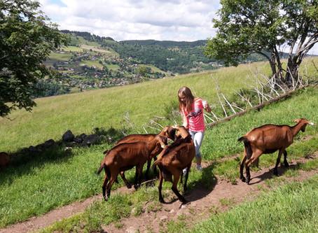 Chèvrerie du Brabant
