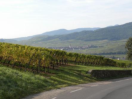 Vue de la route des vins sur Kientzheim
