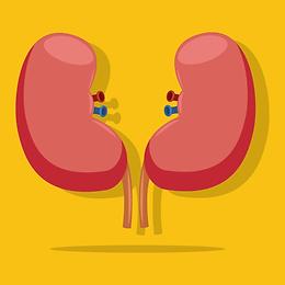 kidney1.png