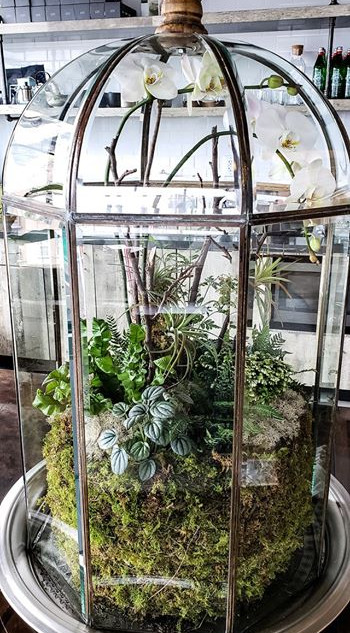 Dreamy Atrium