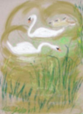 2218, In the Duckweed.jpg