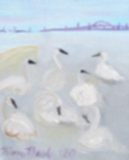 #0820 Seven Trumpeters at Burlington Bay