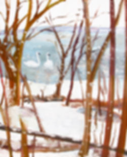 0519 Trumpeter Swans in the Snow, oil on