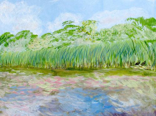 In the Marsh Macro