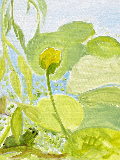 Frog and Pond Lily
