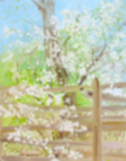 1218, Blossoms by a Split Rail Fence, 20