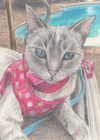 Kitty by the Pool, pencil sketch