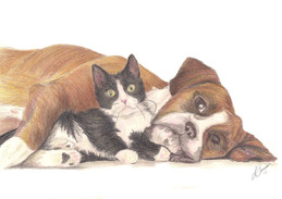 Boxer and Kitten pencil sketch