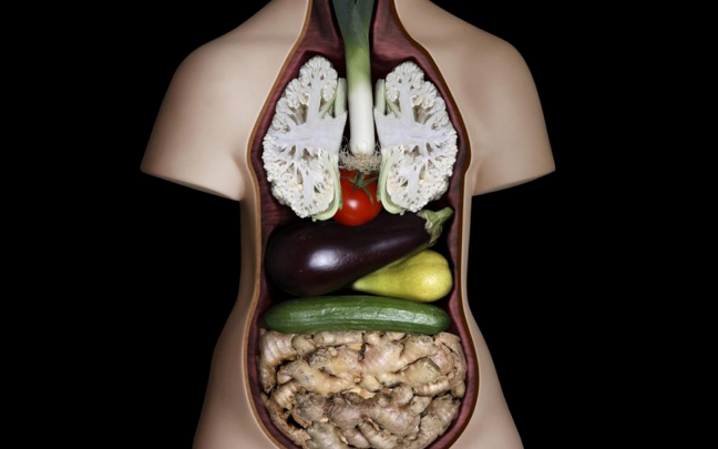 alimentos_orgao