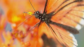 sexe-mensonges-et-papillons.jpg