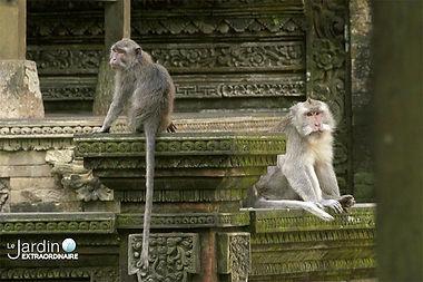 Le Jardin Extraordinaire - Bali