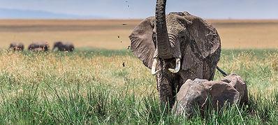 merveilles-africaines-chaque-jour-est-un