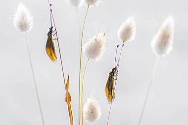 La vie intime des papillons