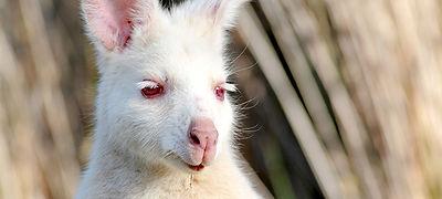 tasmanie-etrange-et-merveilleux.jpg