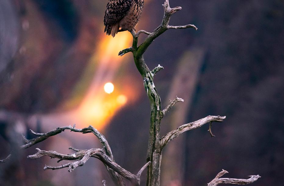 Photo-Oiseaux.jpg