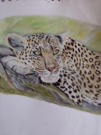 Tierportrait Leopard