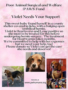 Violet_PAWS Appeal.jpg
