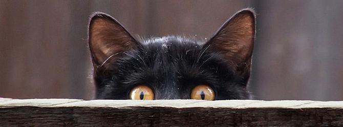 cat FB banner.jpg