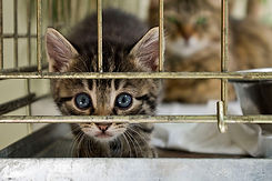 no-kill-cat-shelter.jpg