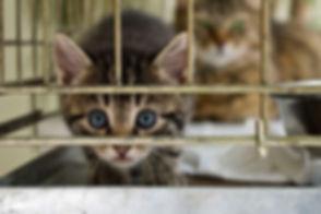 no-kill-cat-shelter.jpg