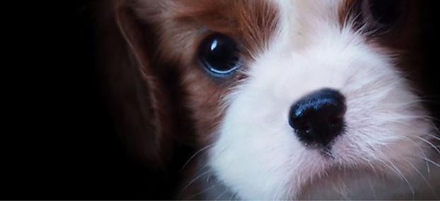 Puppy fb .jpg