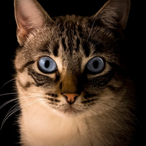 Cat Adoption Fee