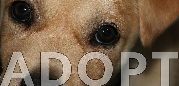 adopt-a-dog.jpg