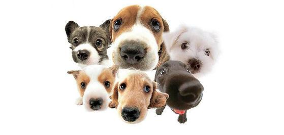 puppies fb.jpg