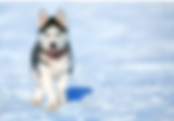 Top Dog Sponsorship