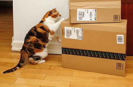 cat-looking-at-Amazon-boxes.jpg