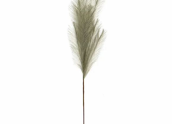 Pampas Grass Sage