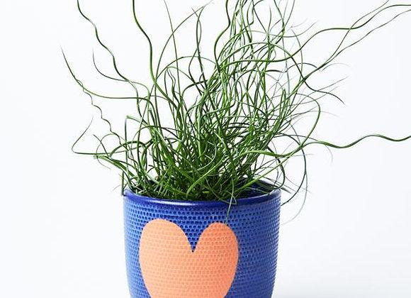 Jones & Co - Heart Pot Indigo