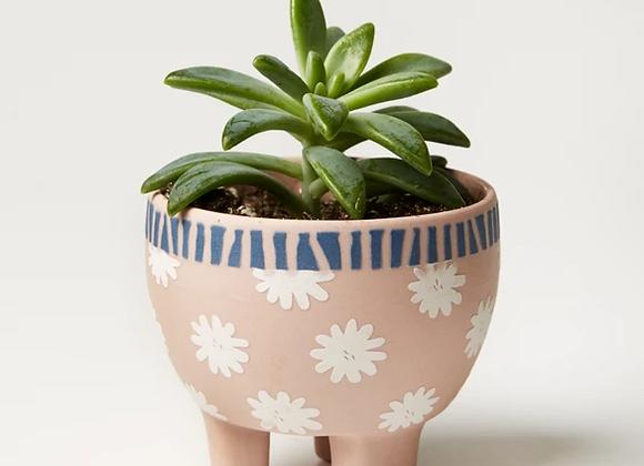 Jones & Co - Paper Cut Planter Pink Star
