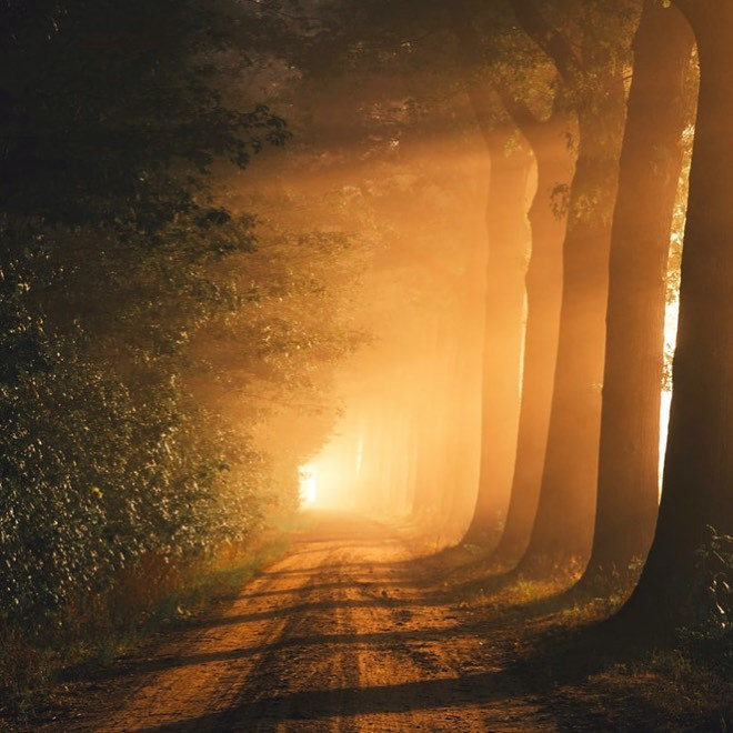 light streaming through between tall trees onto a dirt road