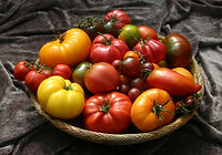 Tomato-Basket-on-Brown-small.jpg