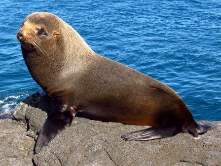 UnCruise Expeditionskreuzfahrten Galápagos