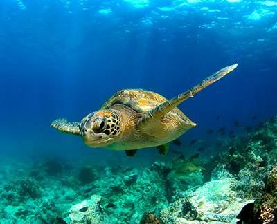 Celebrity Galapagos Expeditionskreuzfahrten