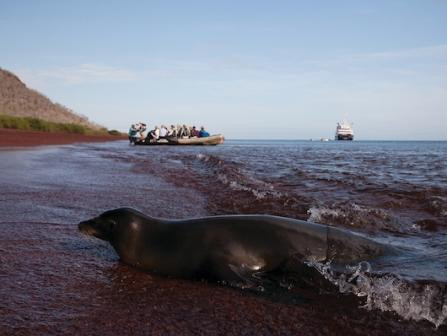 Silversea Expeditionskreuzfahrten Galapagos