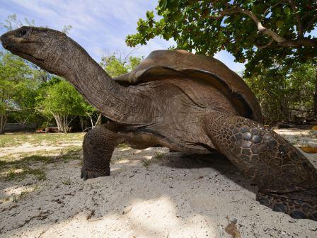Expeditionskreuzfahrt Seychellen