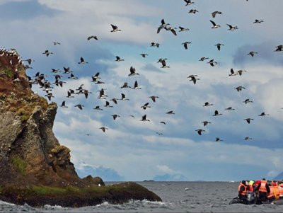 Australis Expeditionskreuzfahrten