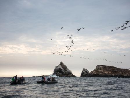 Silversea Expeditionskreuzfahrten Westküste Amerika