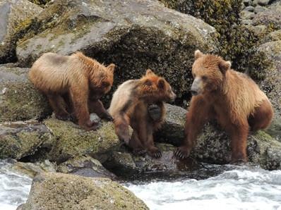 UnCruise Expeditonskreuzfahrten Alaska