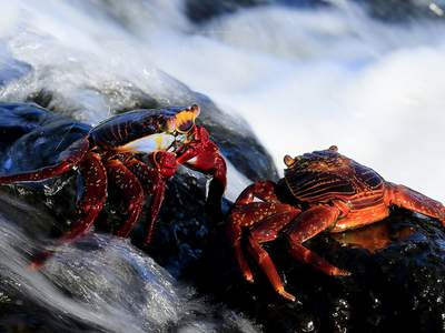 CELEBRITY Expeditionskreuzfahrten Galapagos