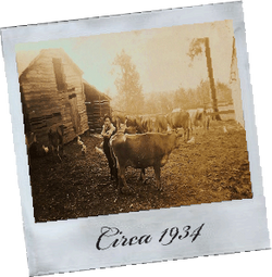Steed's Dairy Circa 1934